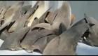 Pesca de tiburones genera polémica en Colombia