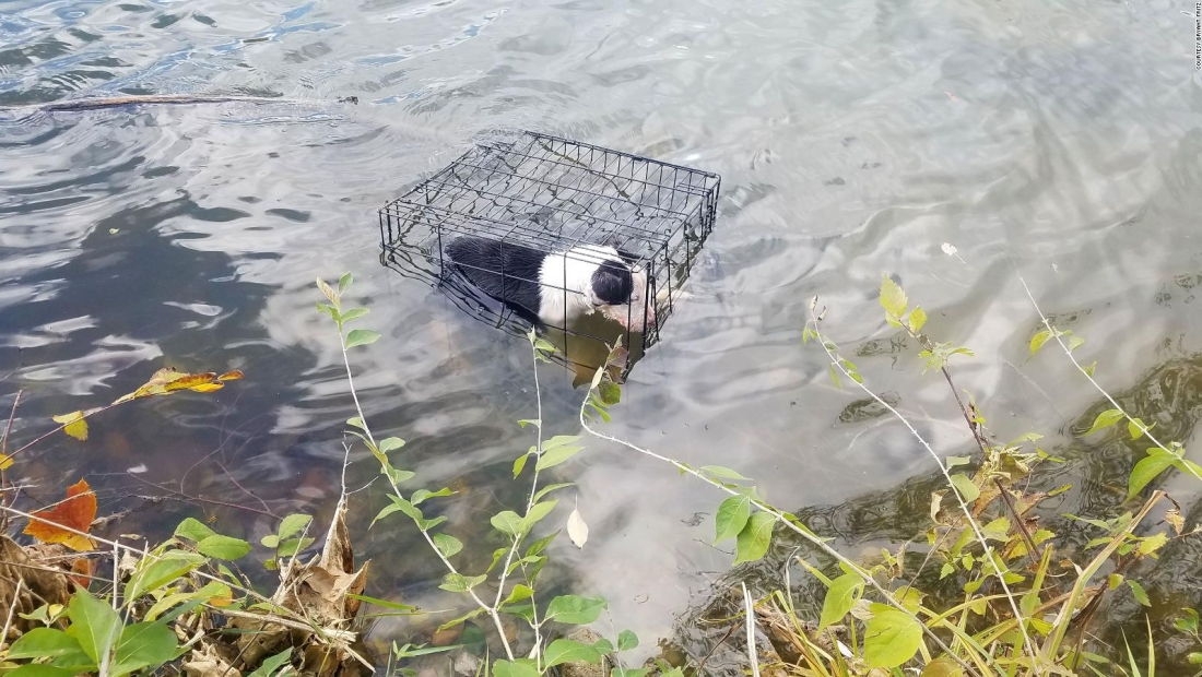 Rescatan cachorro enjaulado en un lago helado de Illinois