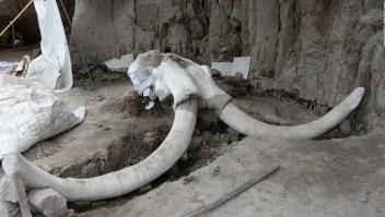 Hallan restos e indicios de caza de mamuts en México