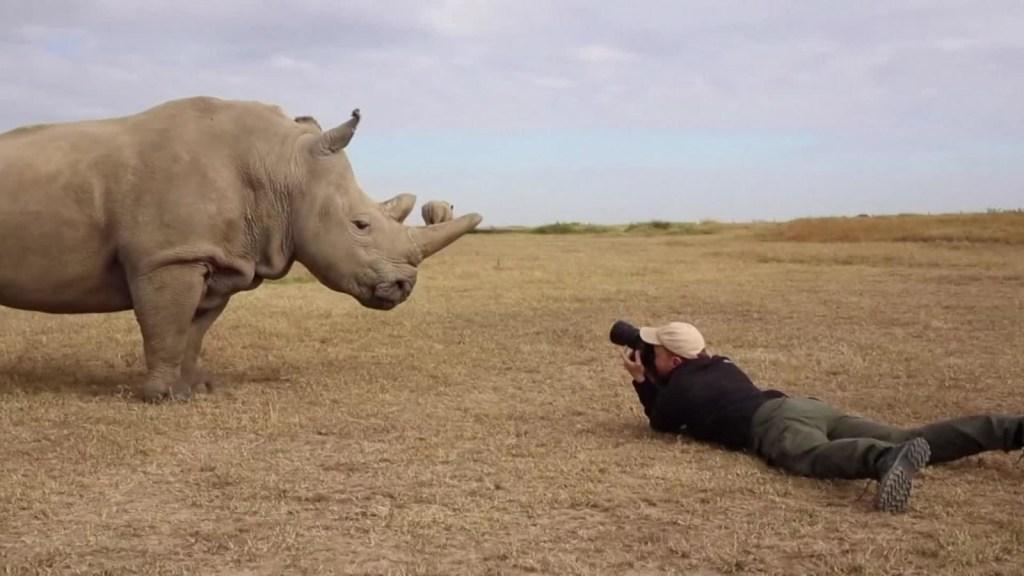 ¿Donarías tus uñas para ayudar a los rinocerontes?