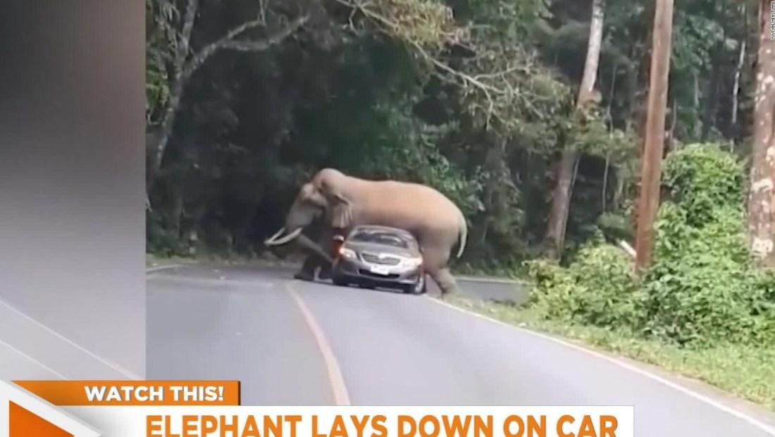 Elefante detiene carro en Tailandia