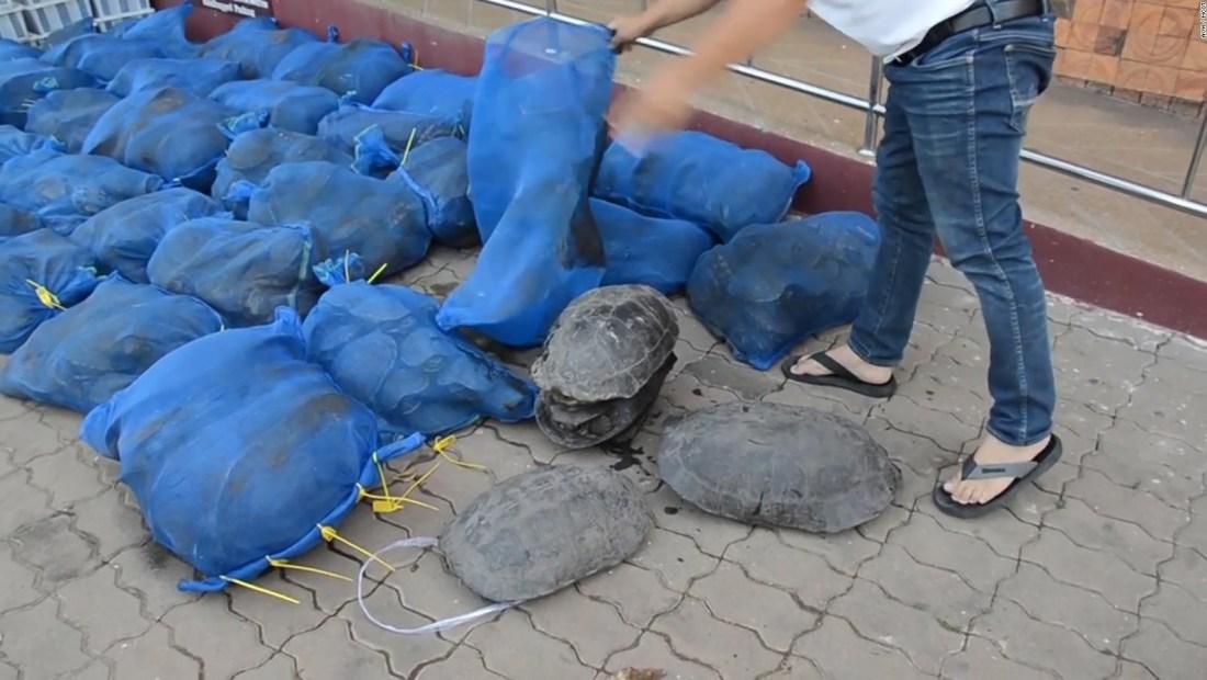 Frenan contrabando de más de 1.000 animales protegidos