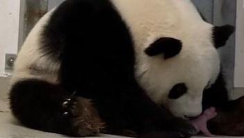 Primera navidad para pandas alemanes
