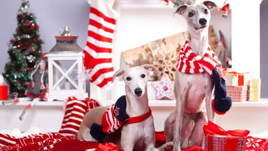 25 regalos para mascotas… o personas que las adoran