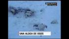 Osos polares hambrientos invaden aldea rusa