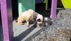 Puerto Rico celebra legislación contra la crueldad animal