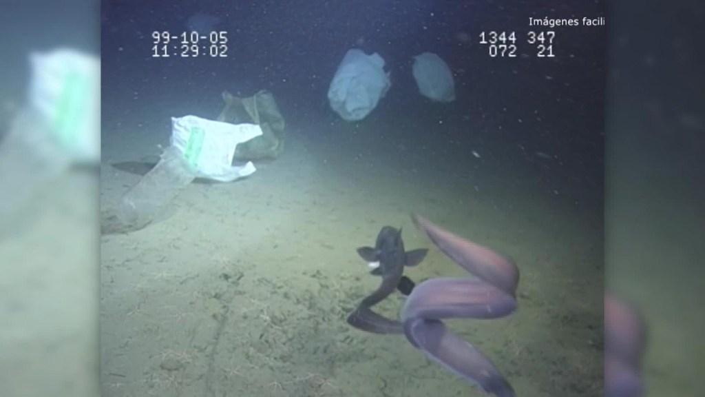 ¿Sabías que hay basura en lo más profundo del océano?