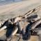 ¿Cómo controlar la pesca ilegal en México?