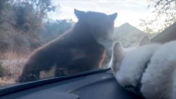 Un hombre y su perro viven escalofriante encuentro con un oso