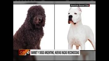 El dogo argentino y el Barbet, reconocidos como razas puras