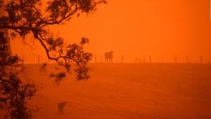 Javier Sierra: Australia sufre una tormenta perfecta