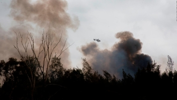 Cientos de animales muertos que trataron de huir de incendios en Australia