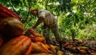 La OPEP del cacao ¿subirá el precio de chocolate?