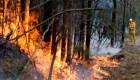 ¿Impacta el humo de incendios y volcanes en el ecosistema?