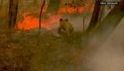 Convocan protesta por incendios forestales en Australia