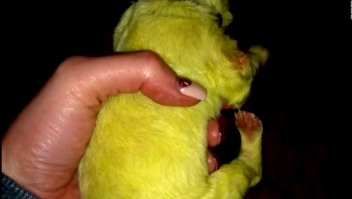 Mira a este inusual cachorro de pelaje verde