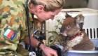 Veterinarios luchan por salvar animales en isla Canguro