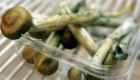 Hongos alucinógenos usarse para tratar el cáncer