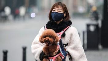 ¿El coronavirus afecta a tu mascota?