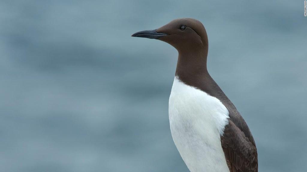 Los científicos dicen que una mancha de agua caliente en el Océano Pacífico mató a un millón de aves marinas