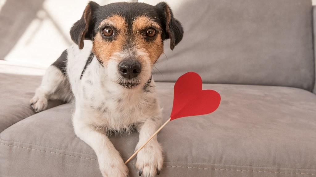 San Valentín para mascotas
