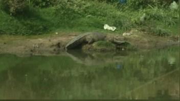 Una ciudad de la India censa a sus cocodrilos