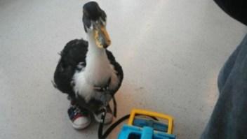 Misterioso pato con tenis camina por el metro