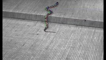 Una serpiente que ayuda en labores de rescate
