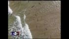 Decenas de tiburones captados desde un dron
