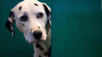 Estas son las 5 mejores películas sobre perros