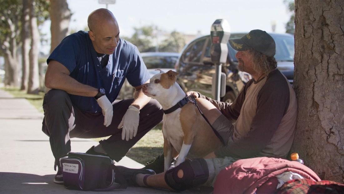 Dr. Stewart, el veterinario de las mascotas en las calles