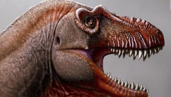 Granjero descubre nueva especie de tiranosaurio, una de las más antiguas de su tipo jamás encontradas