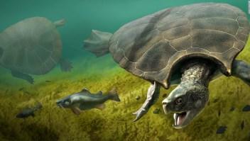 La tortuga más grande que haya existido tenía un caparazón de 3 metros con cuernos