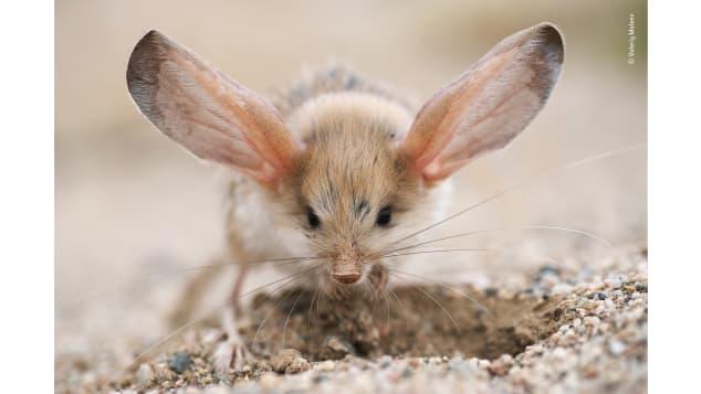 fotos vida silvestre premio museo londres