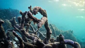 El calentamiento global no da tregua a la Gran Barrera de Coral
