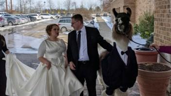 Llegó a la boda de su hermana con una llama