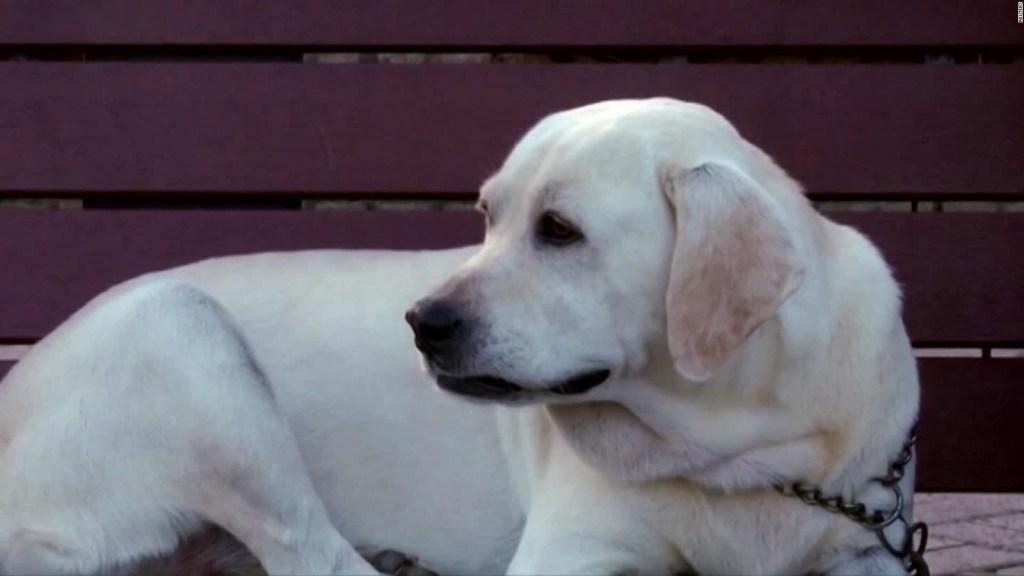 Un perro es contagiado de coronavirus en Hong Kong