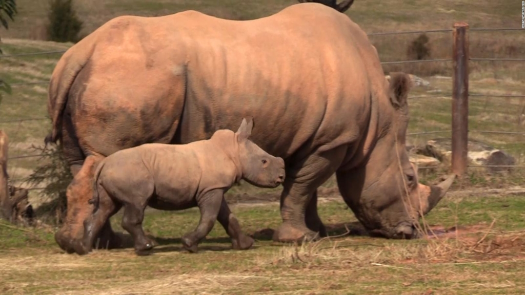 Los zoos cierran, pero puedes ver sus animales en internet