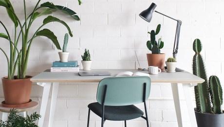 9 Plantas De Interior Muy Fáciles De Mantener Cnn