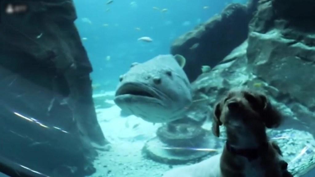 Cachorros pasean por el solitario acuario de Atlanta