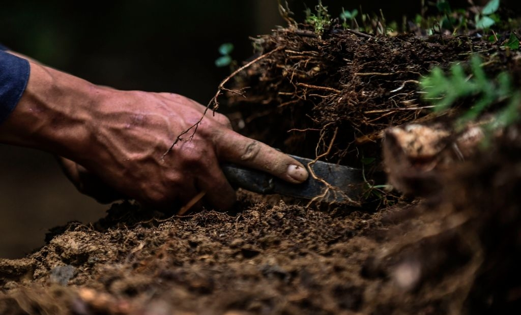 "A deminer digs Looking for mines at a mine field at the Orejon sector in the municipality of Briceno, Antioquia Department, Colombia, on November 22, 2017. Colombia's landmark peace deal with Marxist FARC rebels was supposed to mean peace for all but it has made little difference to indigenous and Afro-Colombian minorities, Amnesty International said on November 22, 2017. Although the agreement between the Colombian government and the FARC was signed, armed conflict is still very much the reality for millions across the country,"" said Salil Shetty, Secretary General at Amnesty International. / AFP PHOTO / JOAQUIN SARMIENTO (Photo credit should read JOAQUIN SARMIENTO/AFP via Getty Images)"