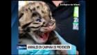 Coronavirus en Estados Unidos: campañas de prevención en zoológicos