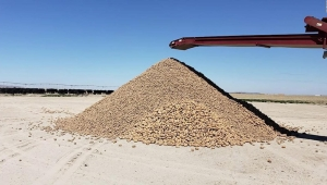Granja regala papas para no desperdiciar las cosechas