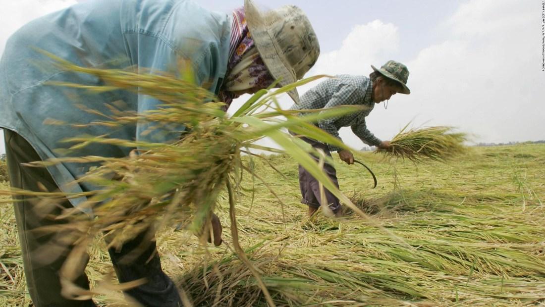 La pandemia de covid-19 amenaza la seguridad alimentaria