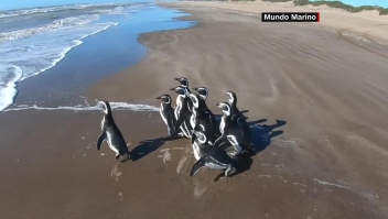 Diez pingüinos recuperan su libertad