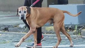 Por qué evitar el hiperapego con mascotas en cuarentena