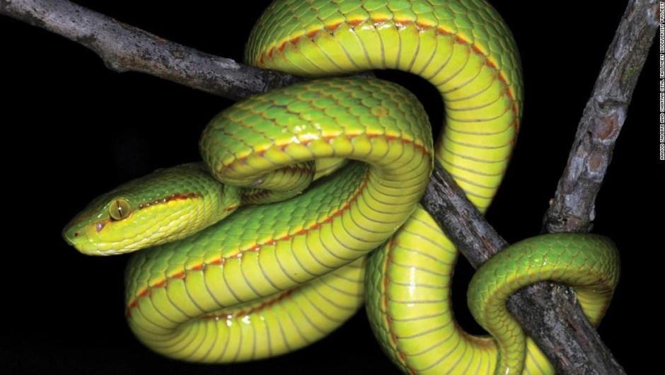 Los científicos descubren una nueva serpiente y la llaman Salazar Slytherin