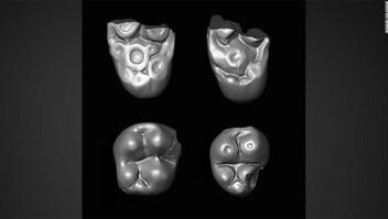 Grupo de monos prehistóricos en balsa a través del Atlántico a América del Sur