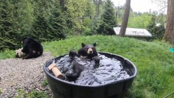 Conozcan a Takoda, el oso que disfruta de darse baños