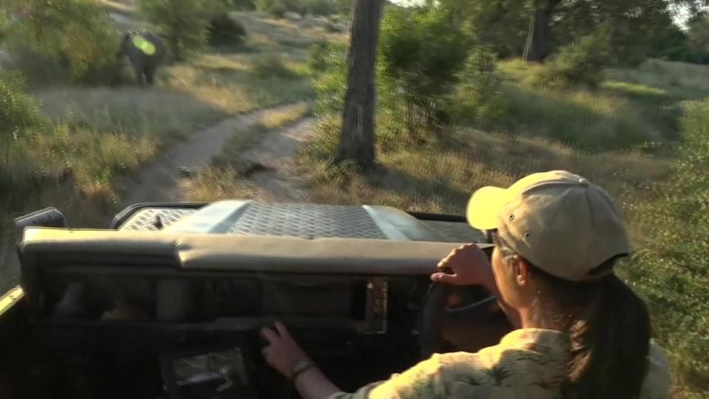 Un safari virtual en medio de la pandemia